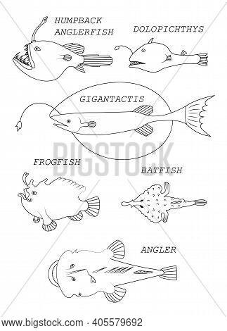 Deep-sea Fishs. Black Outline Vector Illustratuin Collection.
