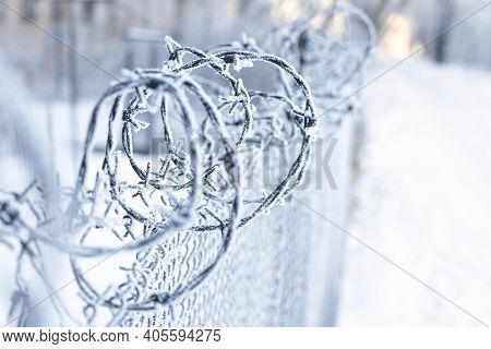 Barbed Wire Wrapped In White Hoarfrost. Wire Fence With Rolled Barbed Wires In Winter. Winter Landsc