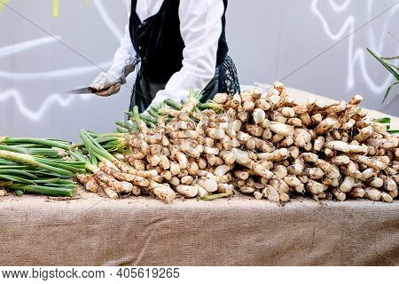 Woman Who Cleans Spring Onion For Grill And Cook. Traditional Holiday Of Spring Onion In Spain.