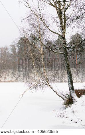 Picturesque Landscape Of Frozen Lake And Shore With Unusual Birch Tree Trunk. Scenic Winter Season I