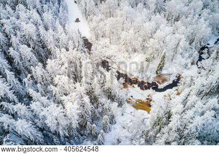 Beautiful  winter forest and river
