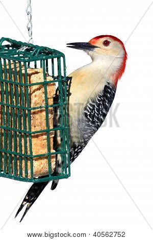 Woodpecker On A Feeder - Isolated On White