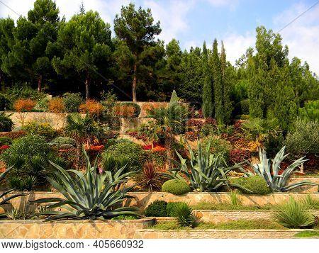 Desert Plants Garden. Drought Tolerant Landscapes, Succulent Cactus Aloe Plants For Desert Garden. P