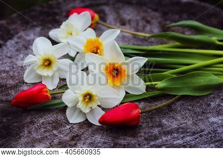 White daffodil and red tulip flowers spring bouquet on wood background. Bouquet of white narcissus (daffodil) spring tulip flowers for 8 March. Top view, flat lay daffodil, tulip bouquet spring bunch