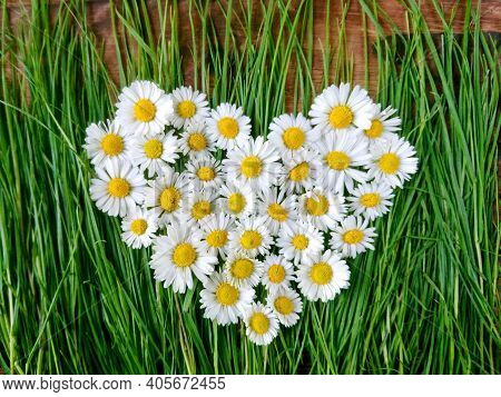 White Daisy Flowers Heart On Green Grass, Top View. Marguerite Heart Symbol Daisy Flowers On Spring
