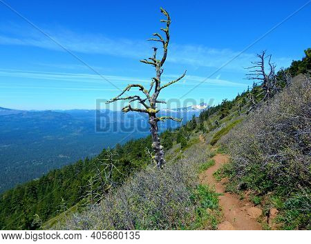 Dead Tree On The Butte - A View On The North Side Of Black Butte - Northwest Of Sisters, Or