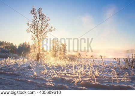 Amazing Winter Scene. Beautiful Winter Nature Landscape In The Morning Sunlight. Scenery Winter. Sno