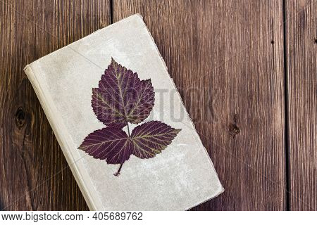 Old Vintage Book For Herbarium With Dry Raspberry Leaf On Rustic Wooden Background With Copy Space,