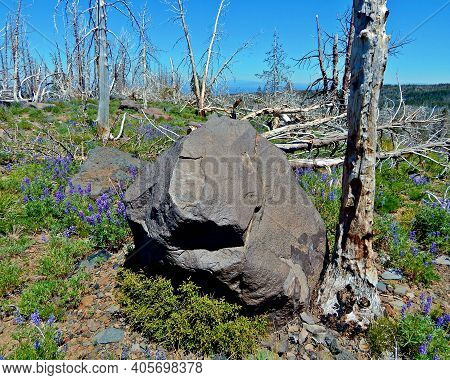 Sunshine Stone - A Large Rock In A Burned-over Area In The Forest West Of Three Creek Lake - South O