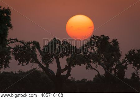 Silhouette Trees During A Breathtaking Sunset In The Evening In Spanish Dehesa, Salamanca, Spain