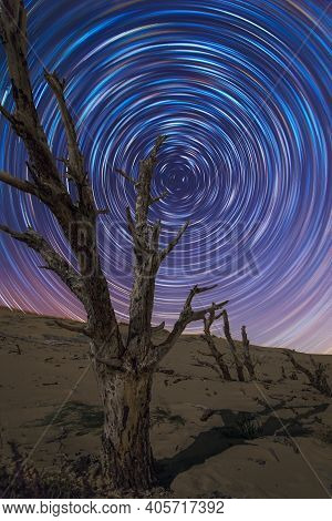 Beautiful Sky At Night With Star Trails And A Dead Tree In A Dune. Valdevaqueros, Tarifa, Andalusia,