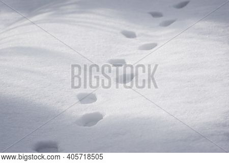 Pathway And Human Foot Prints In The Fresh Snow