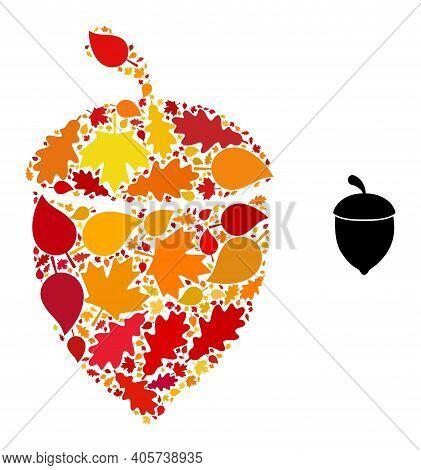 Oak Acorn Mosaic Icon Combined For Fall Season. Vector Oak Acorn Mosaic Is Composed From Randomized