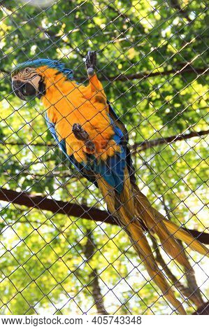 Captive Bird. Ara Parrot. Psittacidae. Blue-yellow Parrot Macaw. Macaw Parrot Sitting On A Cage Net.
