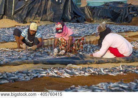 Negombo, Sri Lanka - February 03, 2020: Three Sri Lankan Women Sort The Fish For Drying