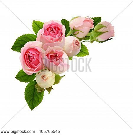Pink Rose Flowers And Green Leaves In A Floral Corner Arrangement Isolated On White