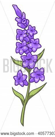 Lavender Branch With Blooming, Flowers In Bloom