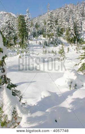 Frozen Ponds
