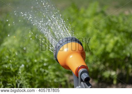 A Woman\'s Hand Holds A Water Sprinkler And Waters The Vegetable Garden, A Selective Focus 1.