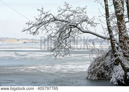 Branch Of An Alder Tree Covered With Snow On The Shore Of A Partly Frozen Lake, Winter Landscape  In