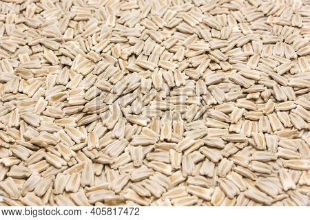 Texture Full Background View Opo Gourd Or Calabash Squash Seeds Isolated On White Background