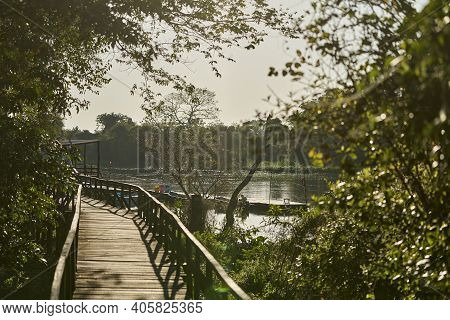 Wooden Boardwalk In The Rainforest Of The Jungle Along The Miranda River In The Pantanal, Brazil, So