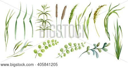 Realistic Green Grass, Herb And Cereals Spikelets Plants Watercolor Set. Different Kind Field Grass,