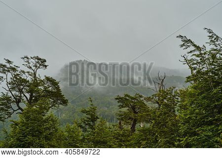 Mist Rising From Coastal Rain Forest Of The Pacific Coast Of Chile In Patagonia, South America, Fog