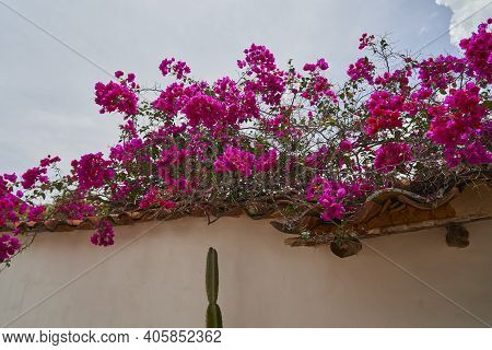 Beautiful Colorful Flowers In A Small Historic Alleyway With Sandstone Cobble Stone In The Historic