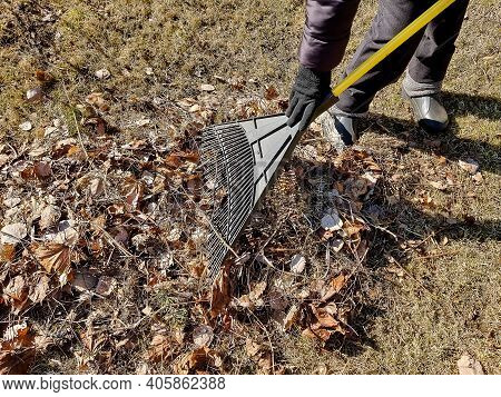 Person Raking Fallen Leaves In The Garden.girl Holding A Rake And Cleaning Lawn From Dry Leaves Duri