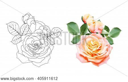 Sweet Color Rose Bouquet And Black And White Roses Outlines. Set Of Flower Roses On White Background