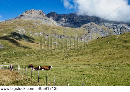 Lanslevillard In The Rhone-alpes, France - Panoramic View Of The Mountains With Cows On A Meadow