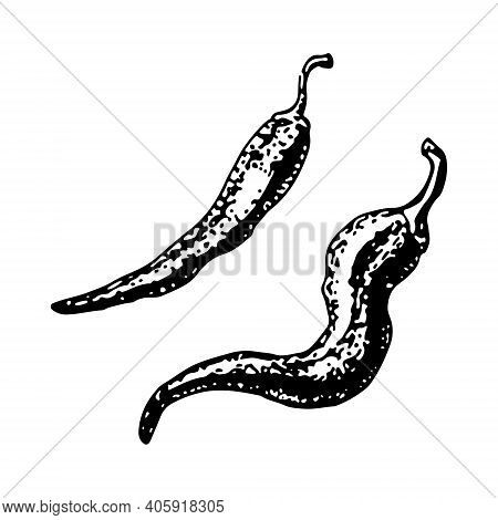 Hot Pepper Sketch. Chili Pepper, Vector Illustration Of Hot Peppers