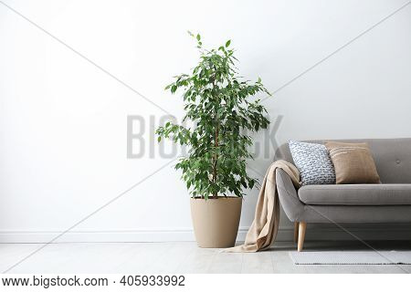 Grey Sofa With Pillows And Beautiful Houseplant In Stylish Living Room Interior. Space For Text