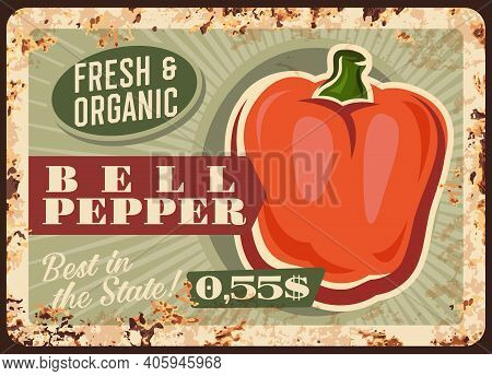 Pepper Vegetable Metal Plate Rusty, Farm Market Food Price, Vector Retro Poster. Natural Organic Bel