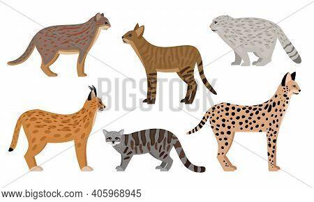 Wild Cats Set. Cartoon Big Aggressive Mammals, Fluffy Zoo Characters, Serval Jungle Cat Pallas Cat R