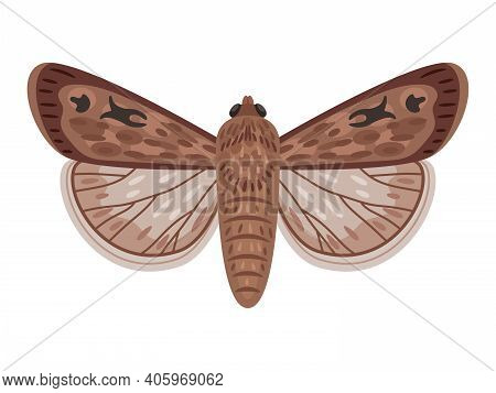 Exotic Moth. Cartoon Night Insect With Wings, Flying Amazing Big Australian Butterfly, Vector Illust