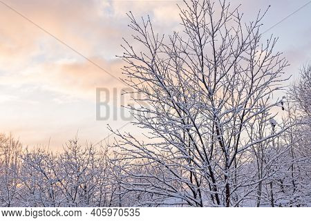 Winter Park, Snow On Tree Branches, Winter Snowy Nature Background, Frosty Morning In The North