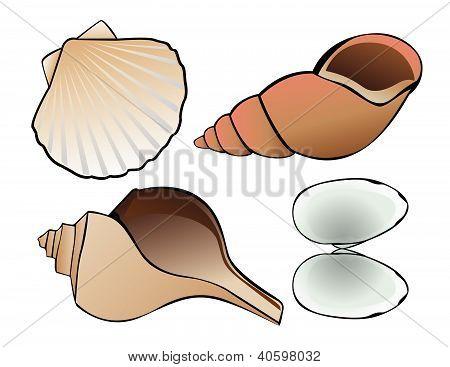 Shells Vector Illustration