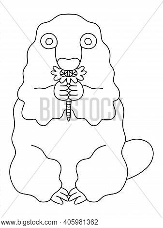 Funny Groundhog With Spring Flower In Hands Coloring Page For Kids And Adults Vector. Black Outline