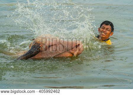 Lopburi, Thailand - January 2019: Rural Boy Is Bathing Buffalo In  Swamp In Countryside Of Lopburi,