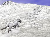 Beautiful leopard appy horse climbing on the snow to the top of the mountain poster