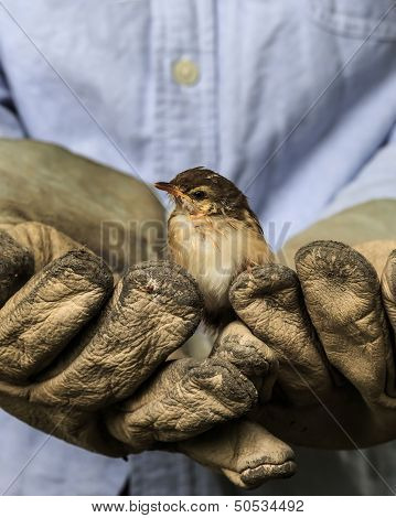 Sparrow on the old gloves of a worker poster