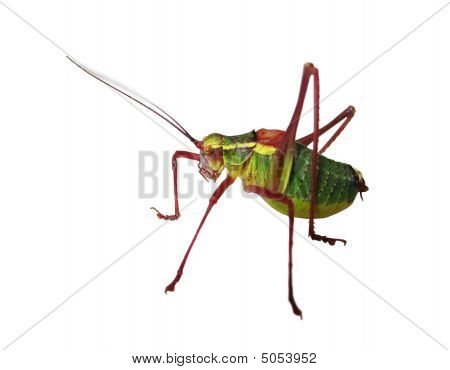 Hopper Closeup Isolated Over White