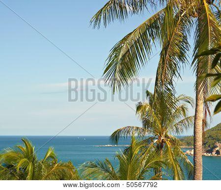 The Sea Through Palm Trees