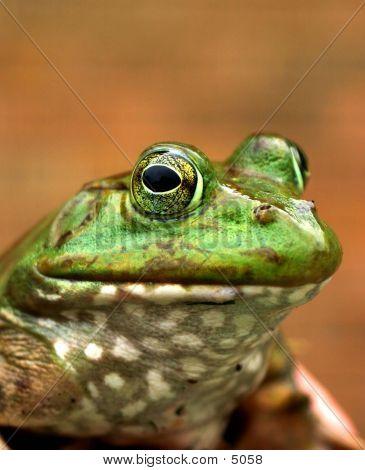 Bullfrog Productions