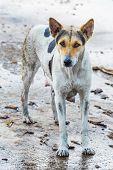 Dirty female dog on wet concrete floor poster