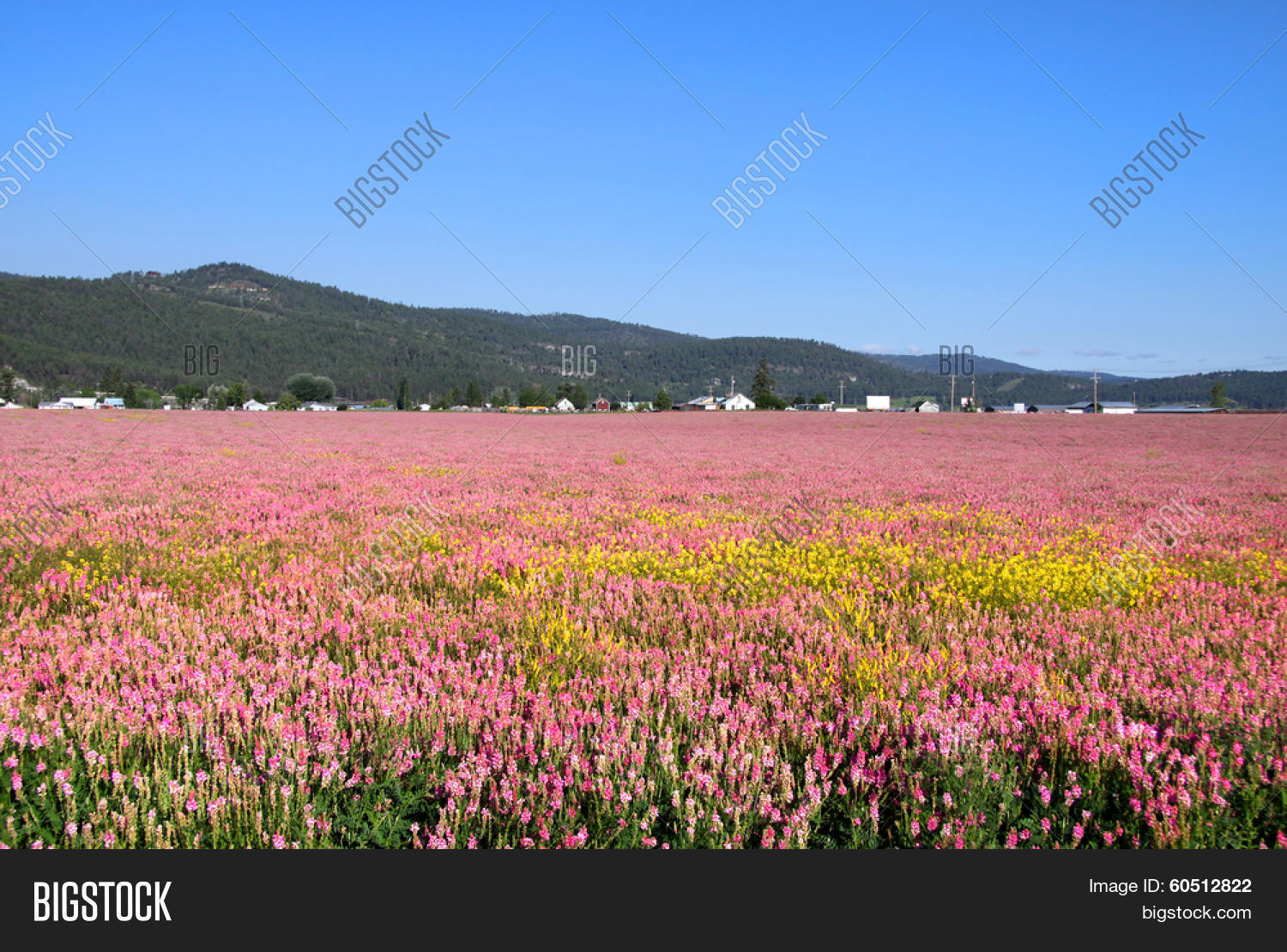 Pink Flower Fields Image Photo Free Trial Bigstock