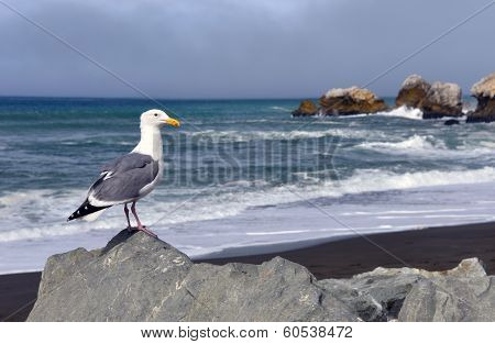 Seagull's View, Rockaway Beach CA