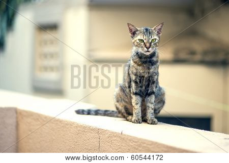 A stray cat walking on a wall